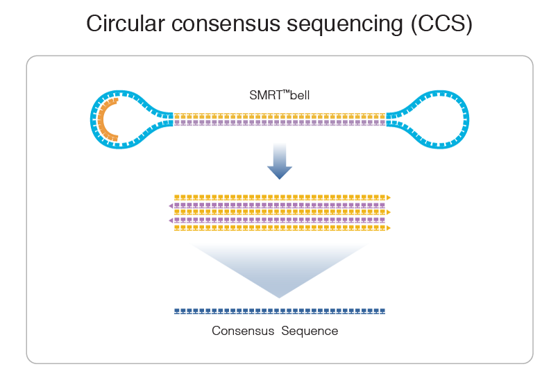 Circular-Consensus-Sequence